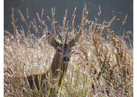 Aus der Bewirtschaftung unserer Reviere, stets frisches Wildbret der heimischen Schalenwildarten