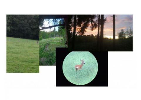 Reh- und Schwarzwild aus Siegerländer Wäldern